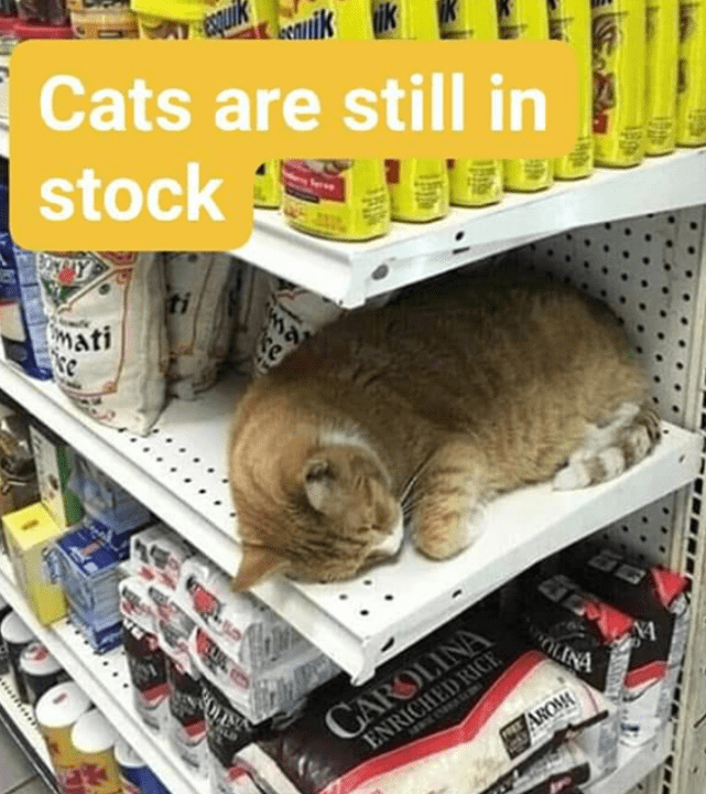 cats-are-still-in-stock-cat-sleeping-on-an-empty-shelf-in-a-supermarket-bodega-cats.png