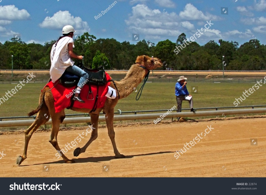 Copie de stock-photo-a-camel-racing-towards-the-finish-line-22874.jpg