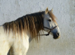 440px-Horse_December_2014-2.png